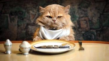 hangry_cat
